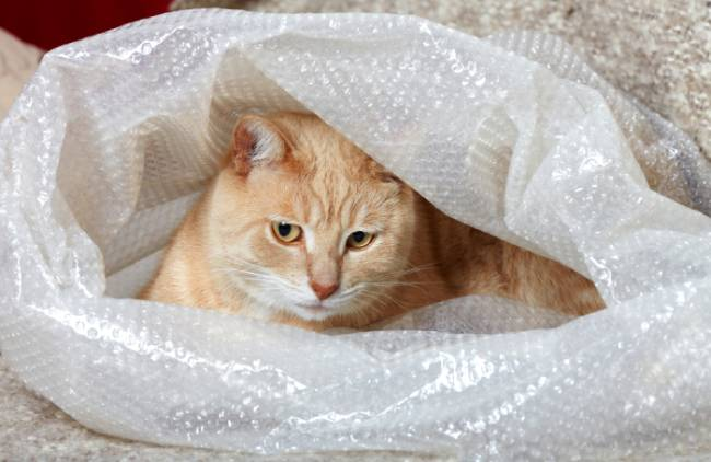 Cat laying comfortable inside bubble wrapping
