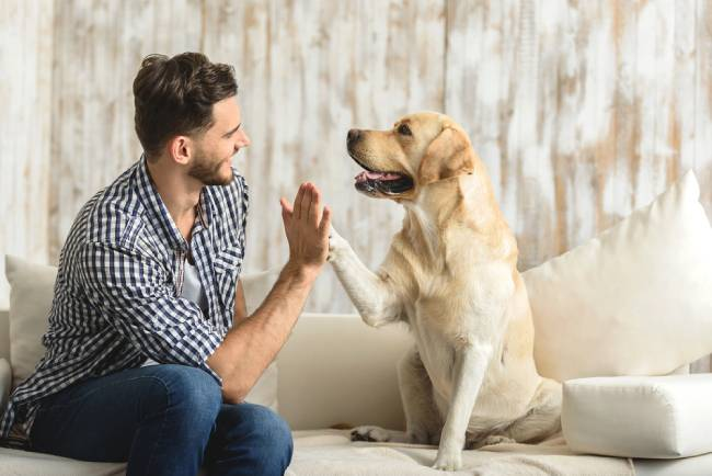 Young man and labrador dog shaking hand and paw